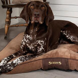 Hundekissen SCRUFFS® Chester -Chocolate -