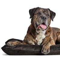 HUNTER Hundebett Bologna, Farbe: Schwarz