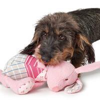 Hundespielzeug Nanum - Hase -